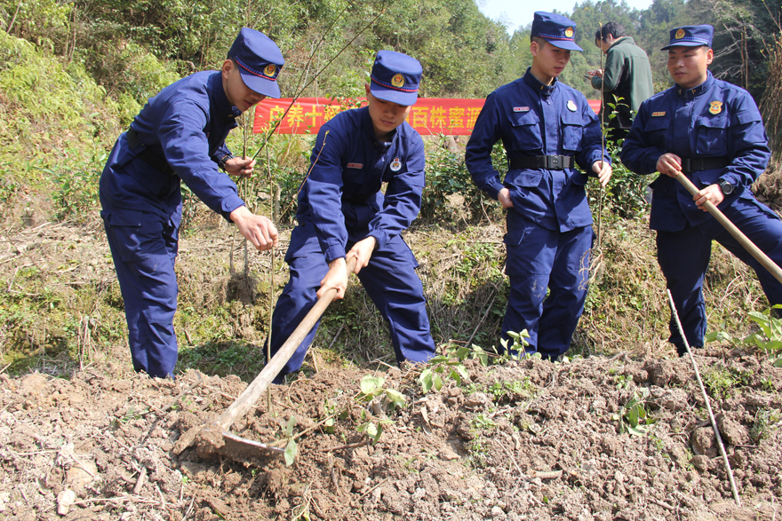 浙江开化消防38年植树为驻地添绿