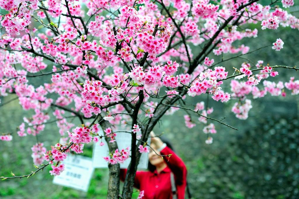 大图 《春暖花开》 朱文杰 摄.jpg