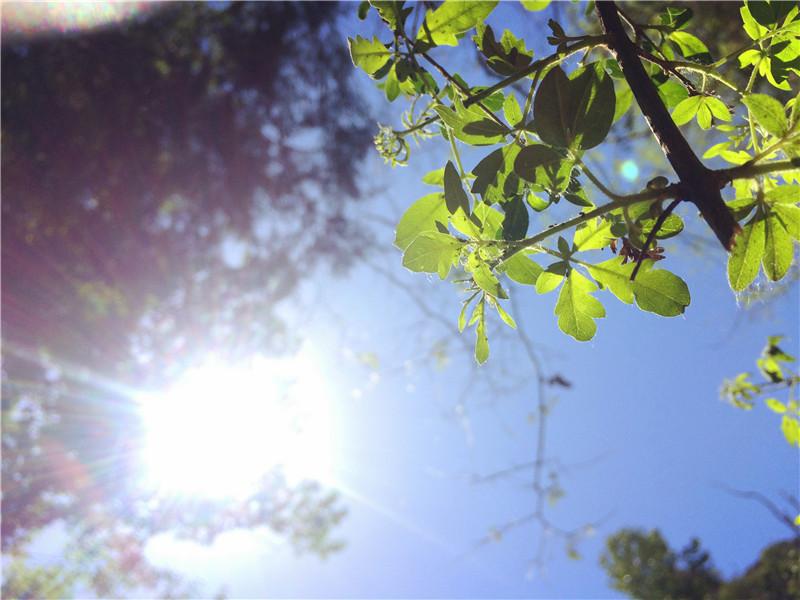 夏日阳光.jpg